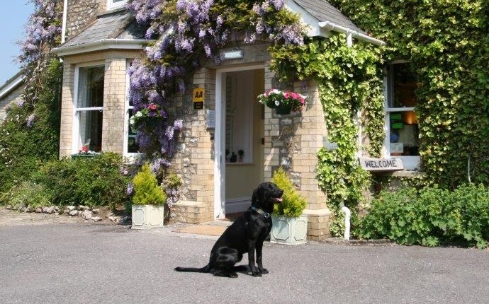 Top 15 Dog-Friendly Hotels in Devon UK