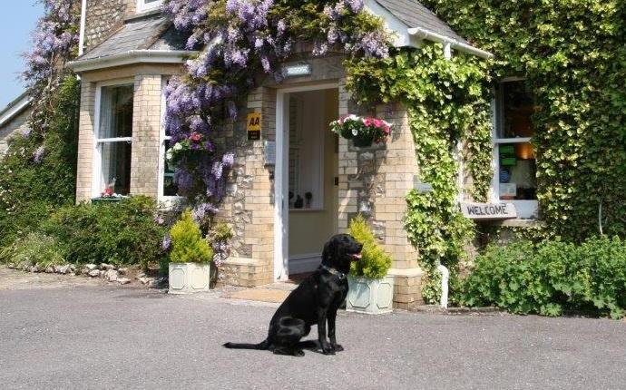 Top 15 Dog-Friendly Hotels in Devon UK
