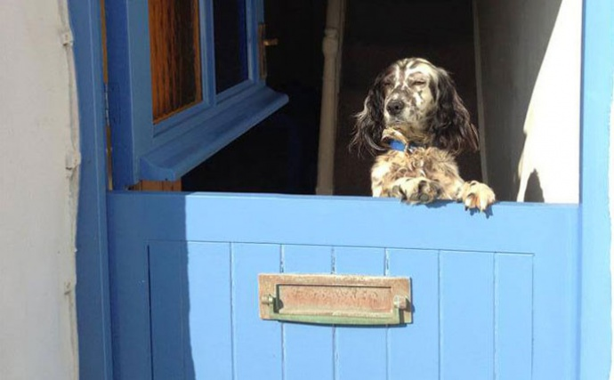 Top 10 dog friendly hotels in Cornwall UK
