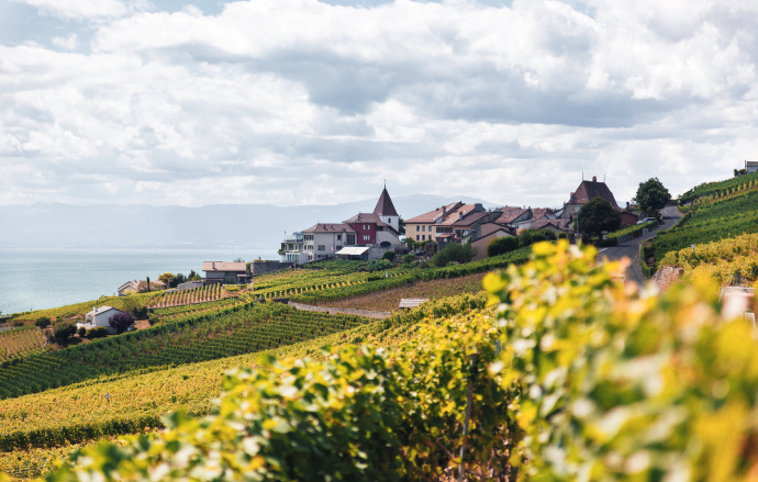 10 Cheap Hotels near Vineyards this Summer