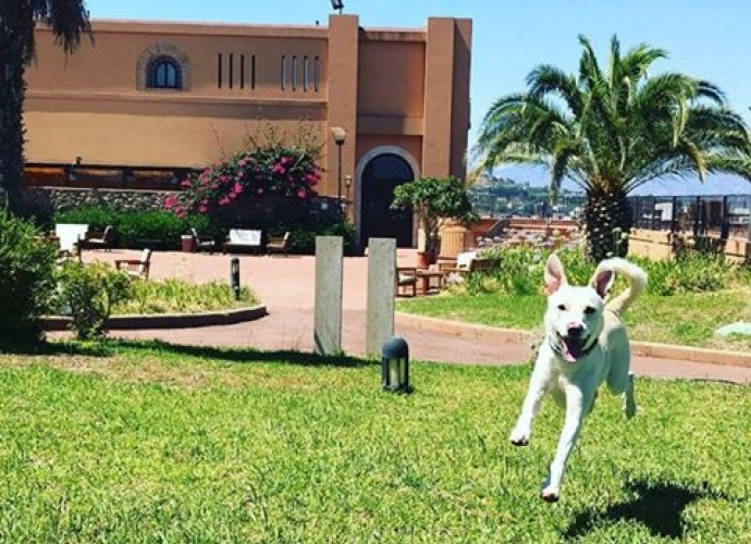 200 dog friendly hotels in Italy with leash-free play areas