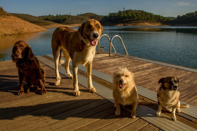 77 dog-friendly hotels in Spain and Portugal with leash-free play areas